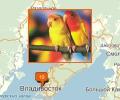 Где находятся зоомагазины во Владивостоке?