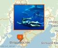 Где поплавать с дельфинами во Владивостоке?