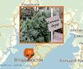 Где купить новогоднюю ёлку во Владивостоке?