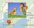 Где осуществляют дрессировку собак во Владивостоке?