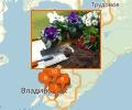 Где лучше всего купить грунт для цветов во Владивостоке?