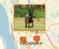 Где осуществляют дрессировку собак в Хабаровске?