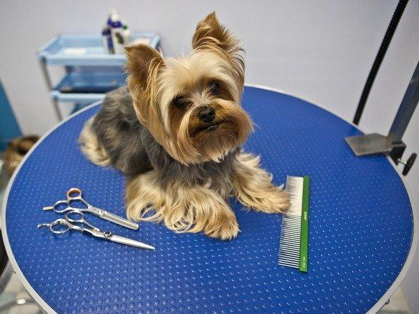Груминг в парикмахерских для собак во Владивостоке