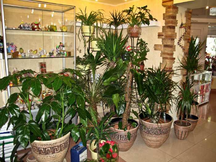 Где купить комнатные и горшечные цветы в Хабаровске?