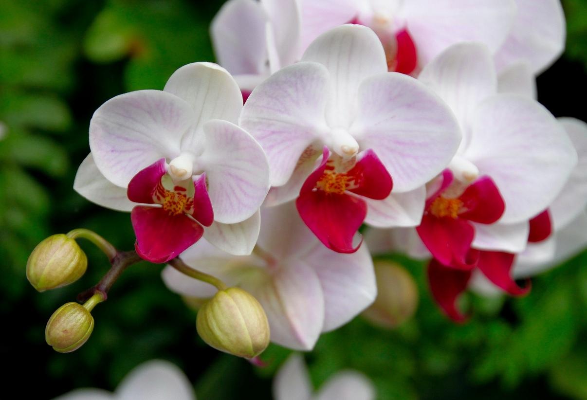 Где купить орхидеи в Хабаровске?
