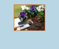 Где лучше всего купить грунт для цветов в Хабаровске?