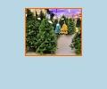 Где купить новогоднюю ёлку в Хабаровске?